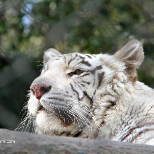 Santiago-Zoologico