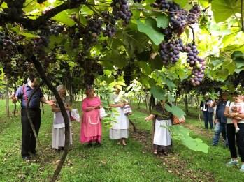 Viagem Wine Vinhos serra gaucha 53