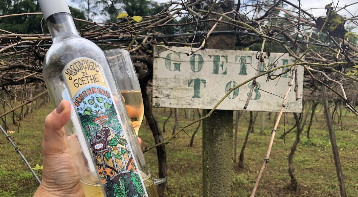 vinho uva Goethe Santa Catarina