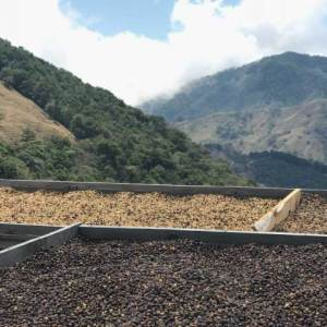 Drying Beds at Santa Teresa in Costa Rica 2100 meters on Ladro Roasting's Spring 2017 Coffee Buying trip