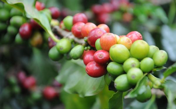Il caffè_4