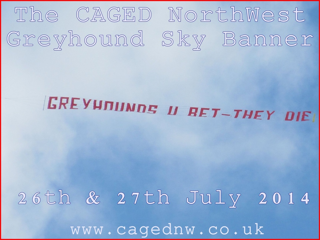 Sky Banner For The Greyhounds