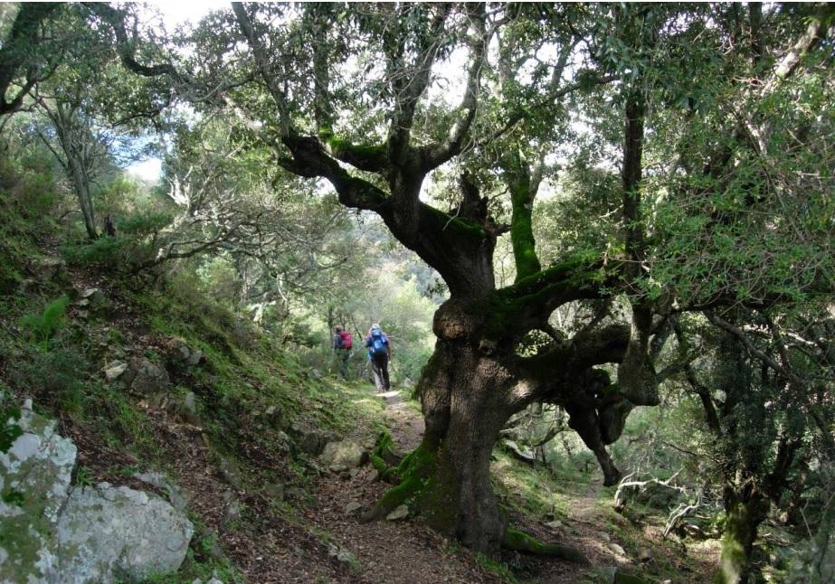 Domenica 06 maggio 2018 – Serpeddì – Foresta Musui – Tuviois