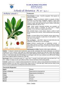 Arbutus unedo fg. 1