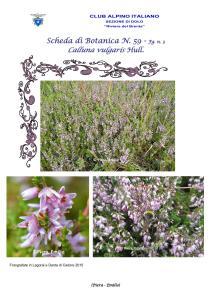 Scheda di Botanica N. 59 Calluna vulgaris fg. 3 - Piera, Emilio