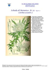 Carlina acaulis fg. 2