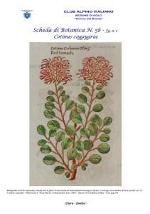 Scheda di Botanica n. 58 Cotinus coggygria fg. 2 - Piera, Emilio