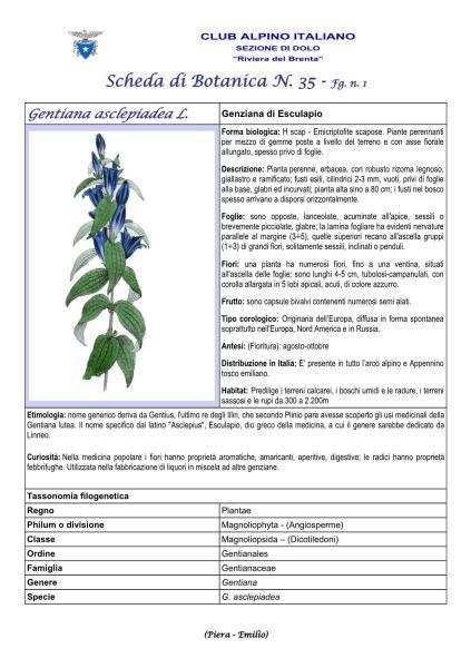 Scheda di Botanica n. Gentiana asclepiadea 1- Piera, Emilio
