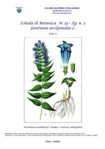 Scheda di Botanica n. 35 Gentiana asclepiadea 2 - Piera, Emilio