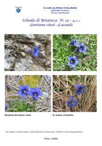 Gentiana fg. 4
