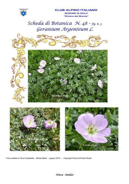 Scheda di Botanica n. 48 Geranium argenteum fg. 3 - Piera, Emilio