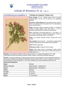 Loiseleuria procumbens 1