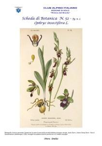 Scheda di Botanica N. 52 Ophrys insectifera fg. 2 - Piera, Emilio