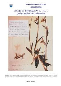 Scheda di Botanica n 64 Ophrys tilaventina fg.2 - Piera, Emilio..