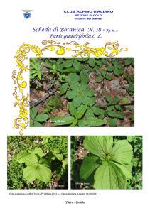 Paris quadrifolia fg. 3