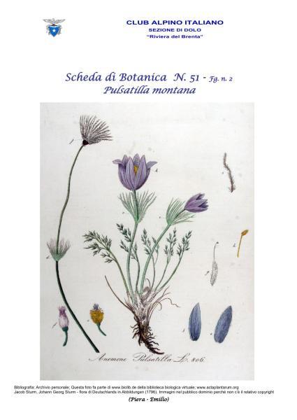 Scheda di Botanica N. 51 Pulsatilla montana fg. 2 - Piera, Emilio