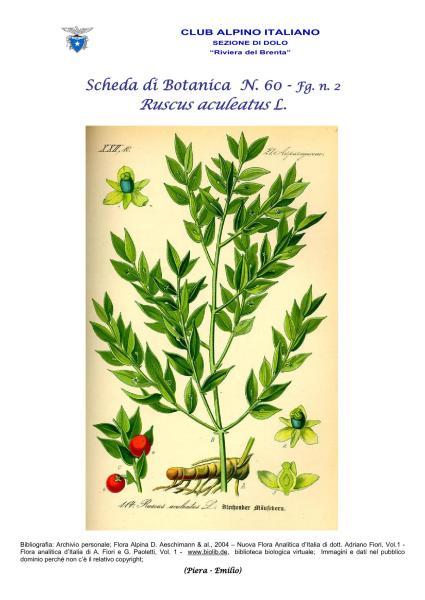 Scheda di Botanica N. 60 Ruscus aculeatus fg. 2 - Piera, Emilio