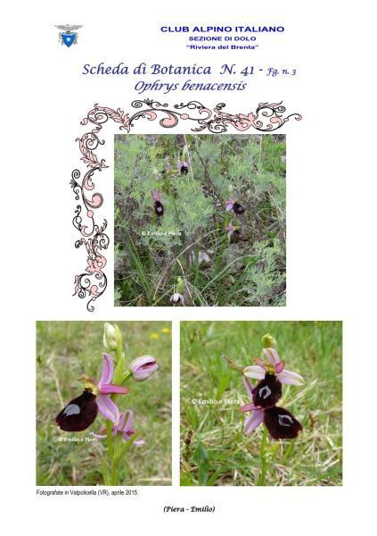 Scheda di Botanica N. 41 fg. 3 - Piera, Emilio