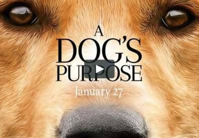 film a dog's purpose