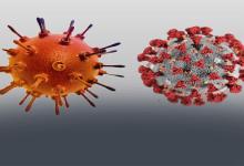 Photo of وزارة الصحة: 24 حالة وفاة.. و544 حالة إيجابية جديدة بفيروس كورونا