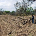 Perú pierde 155,000 hectáreas de bosques al año por deforestación, alerta Adex