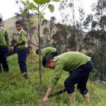 Impulsan reforestación para salvar al árbol de la quina