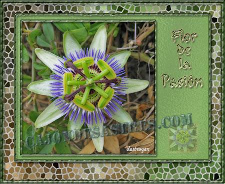 flor de la pasión en mosaico