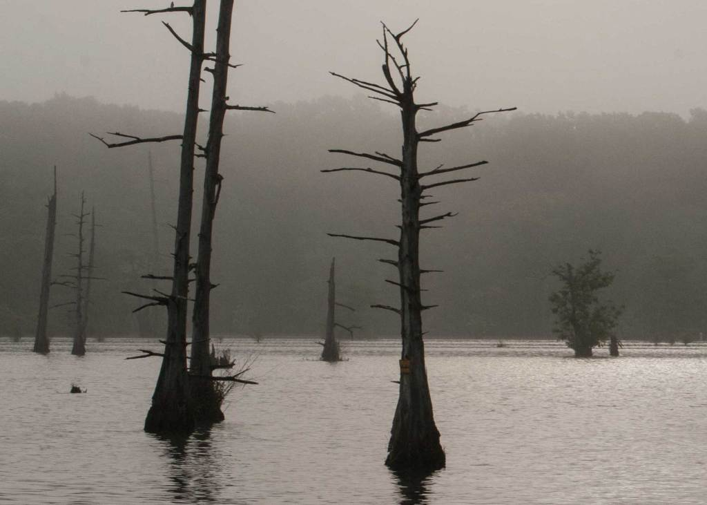 Some of the deadwood is still in place from years ago, but the cypress and tupelo trees have taken their place to create a beautiful flooded landscape.