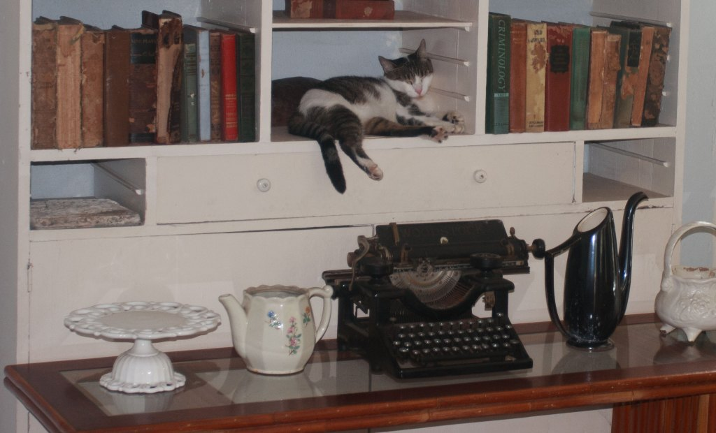Here is one of the resident cats relaxing on a shelf in Hemingway's writing room.