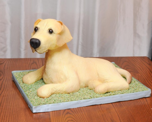 3D sculpted yellow lab dog cake.