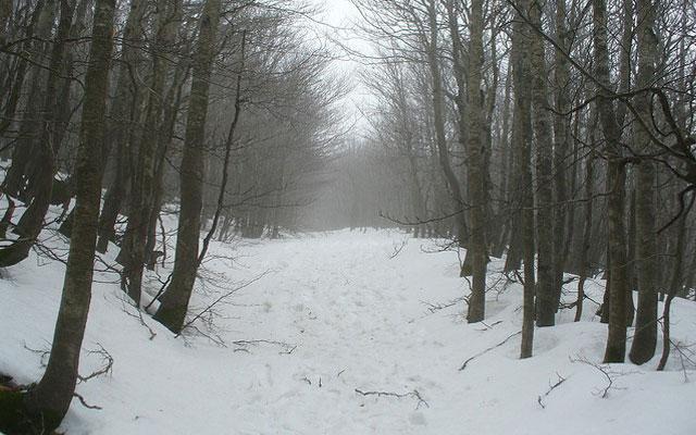 sciare in calabria