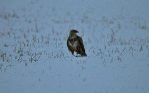 neve in calabria falco