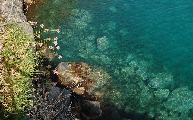 fiori-in-mare copanello