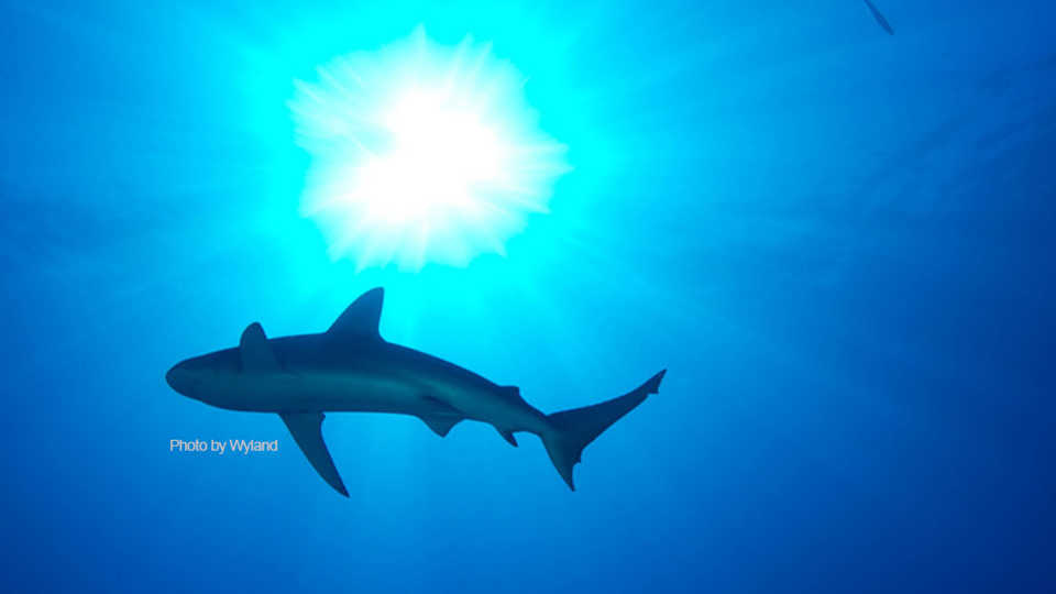 2015 Sharktoberfest Nightlife at California Academy of Sciences