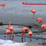 wildlife in El Calafate