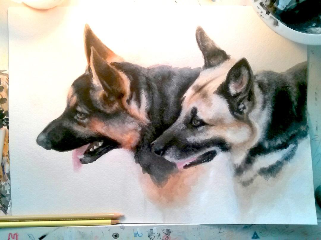 shepherds || watercolor & acrylic