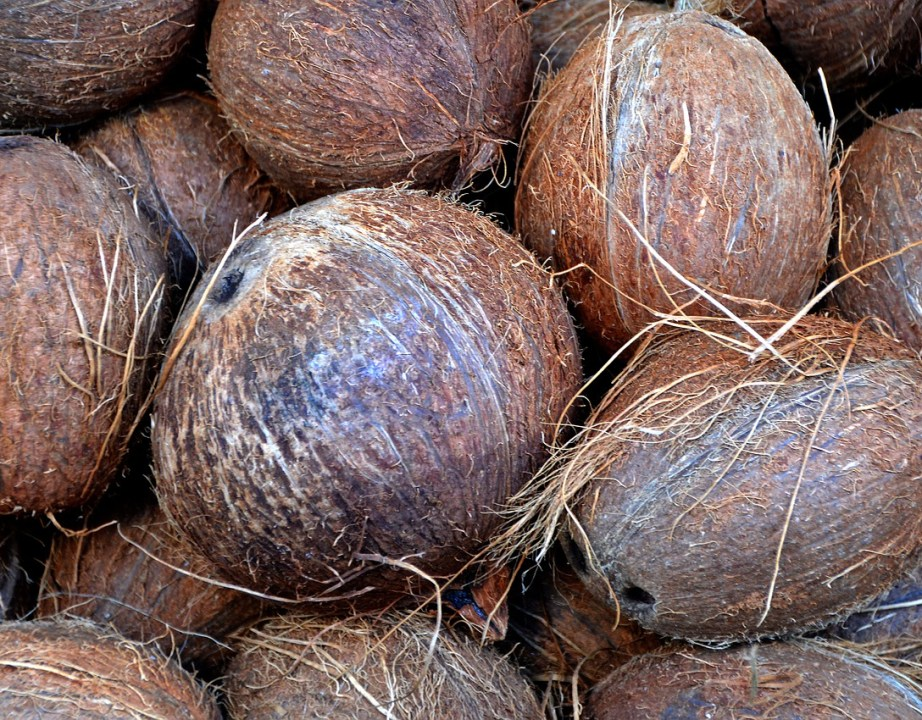 Coconut Husks for Gardeing