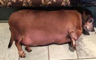fat-sausage