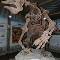 ¿Los grandes mamíferos se extinguieron por la era del hielo... o fuimos nosotros?