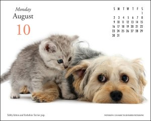pet-desk-calendar-kitten-puppy