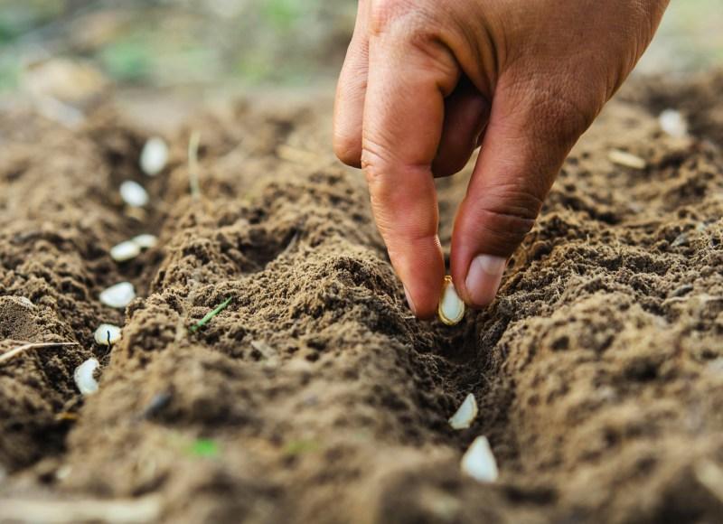 Grow a row and help feed YYC.