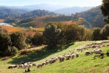 Somerston Estate Vineyard & Winery