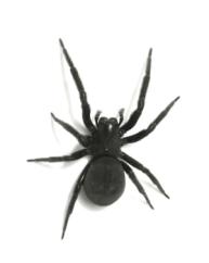 Örümcek İlaçlama