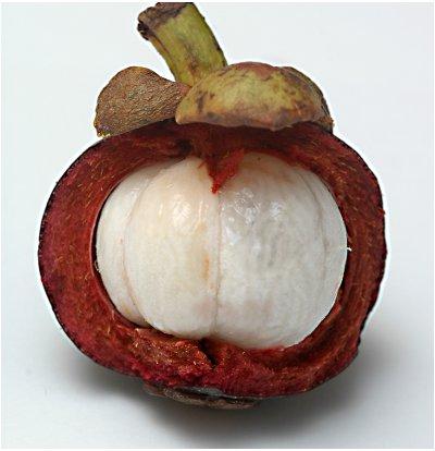 Zenthonic contine mangostana