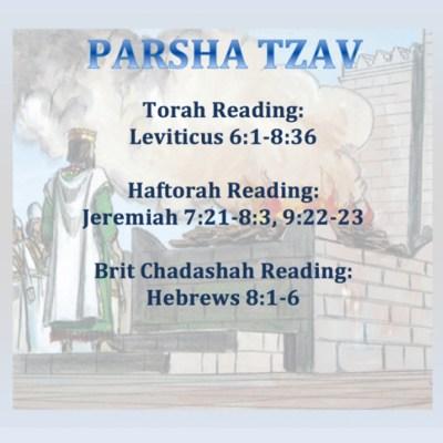 Torah Parsha Tzav