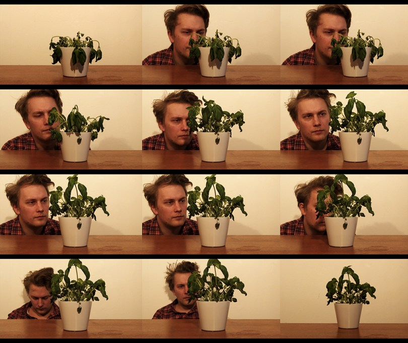 Hello Basil. 12 different pictures (three on each row, 4 rows) with artist Calle Holck sitting with a basil pot at a table in front of him. In the first and last image there is only the basil pot.