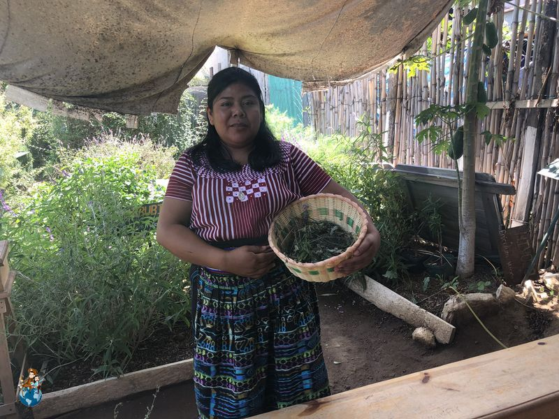 Cooperativa de hierbas medicinales Q'omaneel en San Juan La Laguna