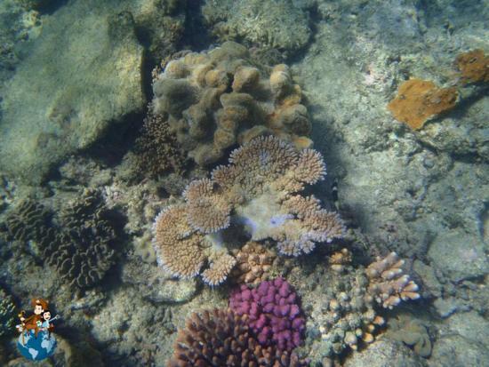 Gran Barrera de Coral - Australia