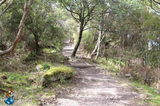 Subida al Monte Haszard - Waimangu