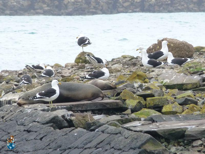 Centro de Albatros Reales del Norte